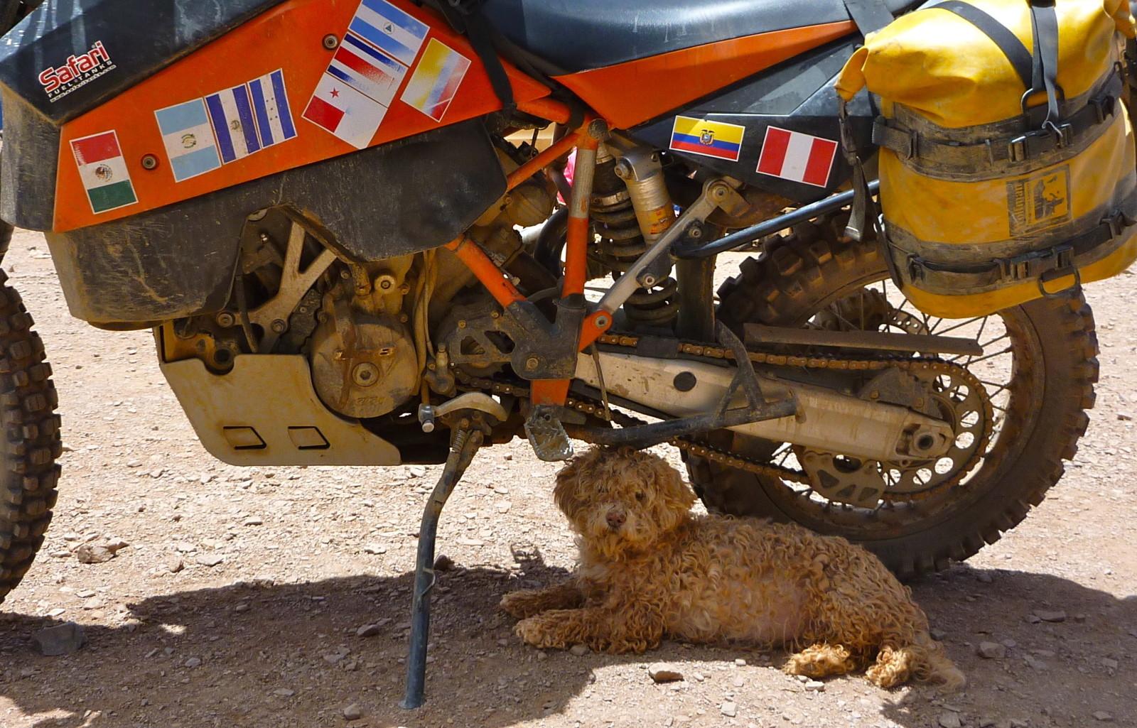 San Vicente Dog